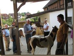 Fohlenschau Umira und Piro (Petras Pferdesuche) 2012 009