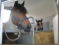 Fohlenschau Umira und Piro (Petras Pferdesuche) 2012 013