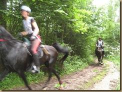 Pferdesuche u.Paddockbau 171