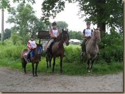 Pferdesuche u.Paddockbau 186
