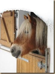 Winter 2011 Sternchen und Jenny Pferdesuche 088