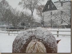 herbst und winter 2012 381