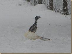 herbst und winter 2012 398