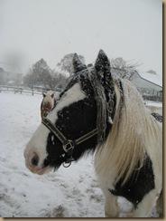 herbst und winter 2012 404