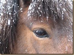 winter pferd