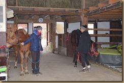 Cyrano neu und pferdewaage 2017 035